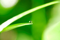 Water drop on a blade of grass against abstract vivid green background.