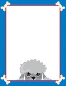 A frame or border featuring the face of a Poodle