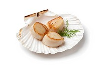 Seared scallops served in a shell with dill on white background