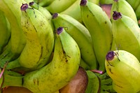 Green Bananas Bunches on Fruit Stand in Tropical Country