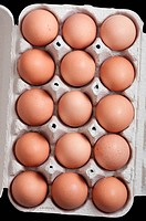 Many home eggs in a protective container