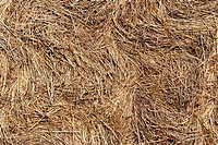 Detail of the pressed straw _ straw bales _ surface
