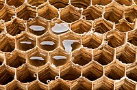 Honeycomb background with honey close up shoot