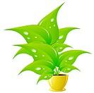 Green flower in a yellow flower pot,