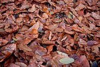 Autum leafs covering the ground.