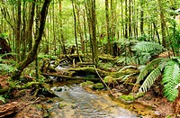 Stream flowing softly through lush rainforest. Moss_covered boulders, fallen trees and treeferns make for an unspoilt environment. Yarra Ranges, Victo...
