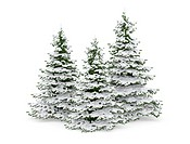 three snow covered christmas trees on white background