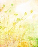 Soft summer meadow textured background with text space