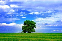 Trees and green grass. Blue sky background