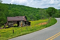 Old barns in a pasture with yellow wildflowers beside a curving mountain road.