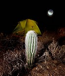night scene in desert camping