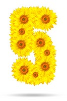 Number five made of sunflower