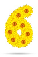 Number six made of sunflower