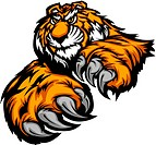 Tiger Mascot Reaching with Claws and Paws Vector Image