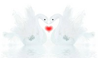 Swans, beautiful isolated Valentine decoration, holiday ornament over white background