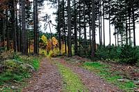 Hochwald Schwarzwald Deutschland High Forest _ Black Forest Germany