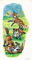 Red fox (Vulpes vulpes) cubs playing and hunting butterflies, illustration.