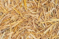closeup of a pile of golden straw