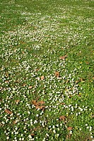 im Rasen