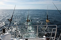 Deep_sea sports_fishing, Puerto Vallarta, Jalisco, Mexico, North America