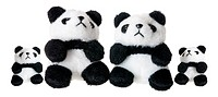 Panda Soft Toys on White Background