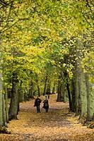 Hampstead Heath, North London, England, United Kingdom, Europe
