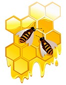 Gold fine honey. Vector illustration.Image contains gradient meshes.
