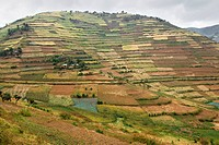 Landscape along the road between Kisoro and Muko in southern Uganda.