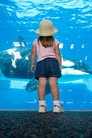 USA, California, San Diego, Sea World whale tank                                                                                                      ...