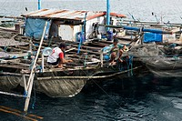 Fishing Platform called Bagan, Cenderawasih Bay, West Papua, Indonesia                                                                                ...
