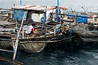Fishing Platform called Bagan, Cenderawasih Bay, West Papua, Indonesia ...