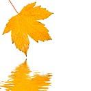 Goldene Blätter im Herbst