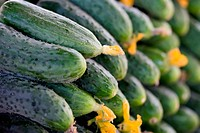 Fresh organic cucumbers, food background