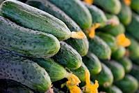 Fresh organic cucumbers, food background