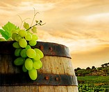 Wine barrel with fresh grape, on background of sunset vineyard