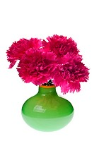 pink carnations in a green vase isolated on white