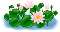 Group of Pink and white Lotus Flower or Water Lily Floating On Water, Isolated on white