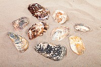 background of beach with different shells in closeup
