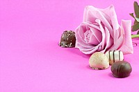 pink rose and chocolate background in pink