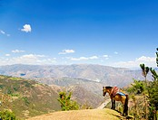 Mule standing on the hill and enjoying the view of Andean Mountains
