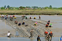 The 2011 Maldon Mud Race at Maldon, on the Essex coast, England, United Kingdom, Europe