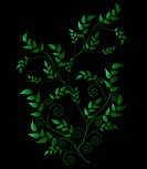 Fanciful stylized Leaves Isolated on Black