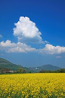 Nature, Geography, Agriculture, Europe, Switzerland, Bern, Rape, Blossom, Field, Cloud, Blue, White, Yellow, Sky, Tranquil, Rural, Landscape, Scenic, ...