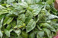 Organic Basil Leaves in Vegetable Stand at Farmers Market