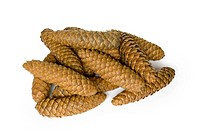 Small group of cones combined on a white background