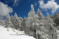 Troodos mountain in winter, Cyprus, Eastern Mediterranean Sea island, Eurasia