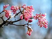 Blüten im Frühjahr