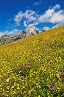 Austria, Salzburg County, View of Mount Bischofsmutze with alpine meadow during summer