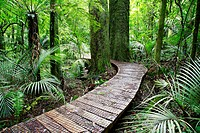 Boardwalk in lush green tropical forest