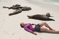 High angle view of a woman lying on the beach with Galapagos sea lions Zalophus californianus wollebacki, Gardner Bay, Espanola Island, Galapagos Isla...